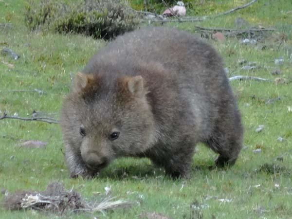 wombat-ali-green.jpg