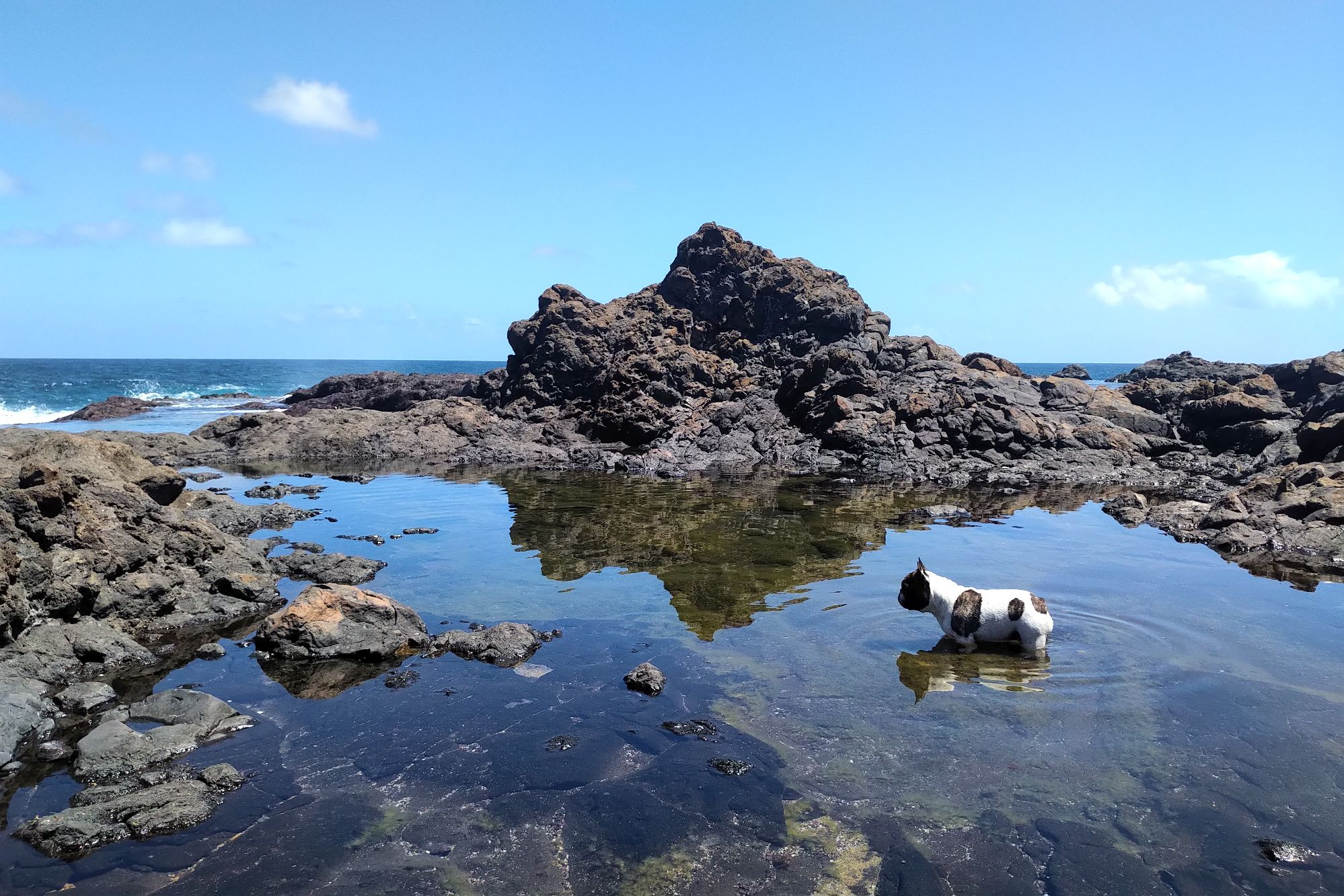 Rock pools French bulldog 2.jpg